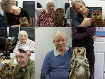 Owls Visit